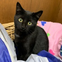 Black Friday Sale!!! (Black cats, that is)
